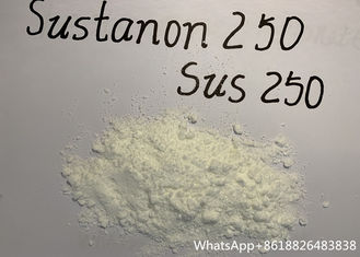 China Sustanon 250 Testosterone , SUS 250 Raw Powder And Injectable Oil supplier